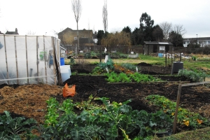 Allotments on the Hertford Road